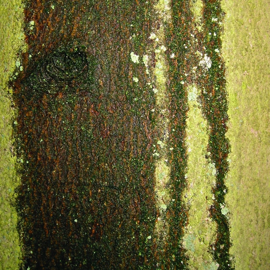 greenbark